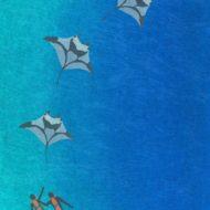 Divers And Mantas - Susanna Clasby