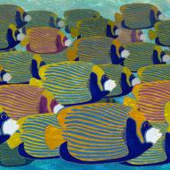 Angel Fish - Susanna Clasby