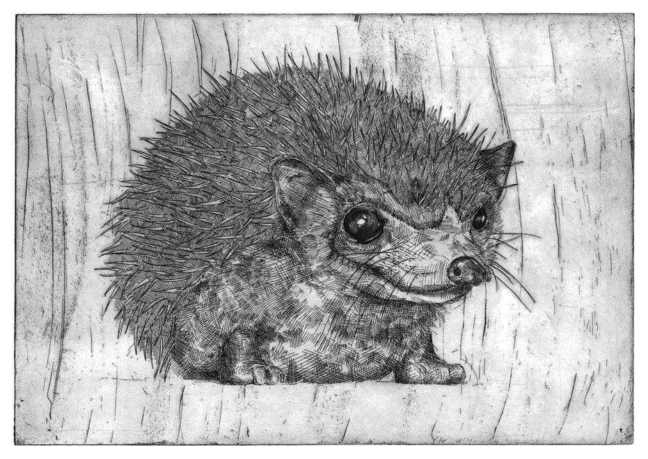 Hedgehog - Rosie McLay