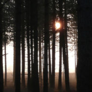 forest sunrise - mark hayward