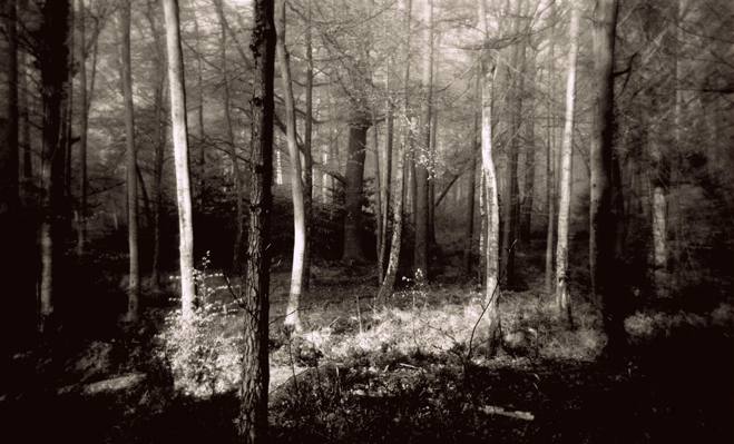 forest clearing - mark hayward