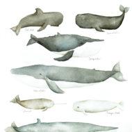 A3 Whales lina lofstrand