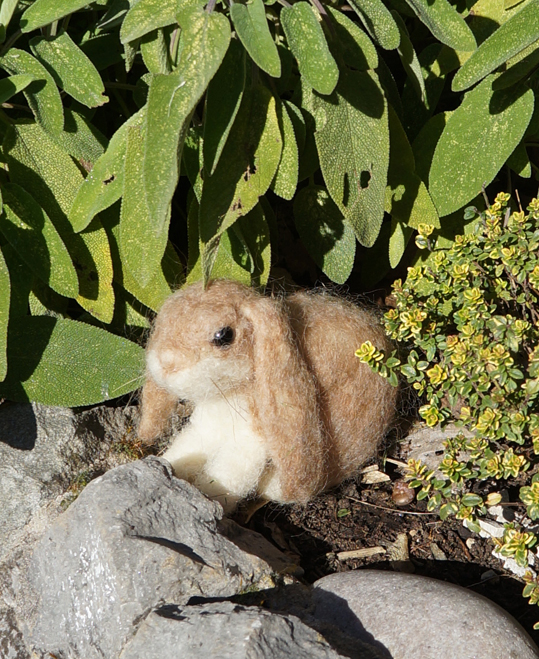 Brown Bunny In Herbs - Emma Holden