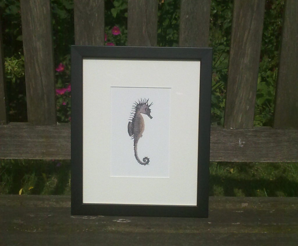 FRAMED Seahorse claire vaughan