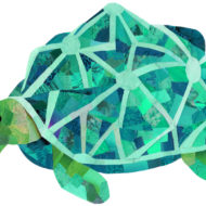 Turquoise Tortoise - Hollycollage