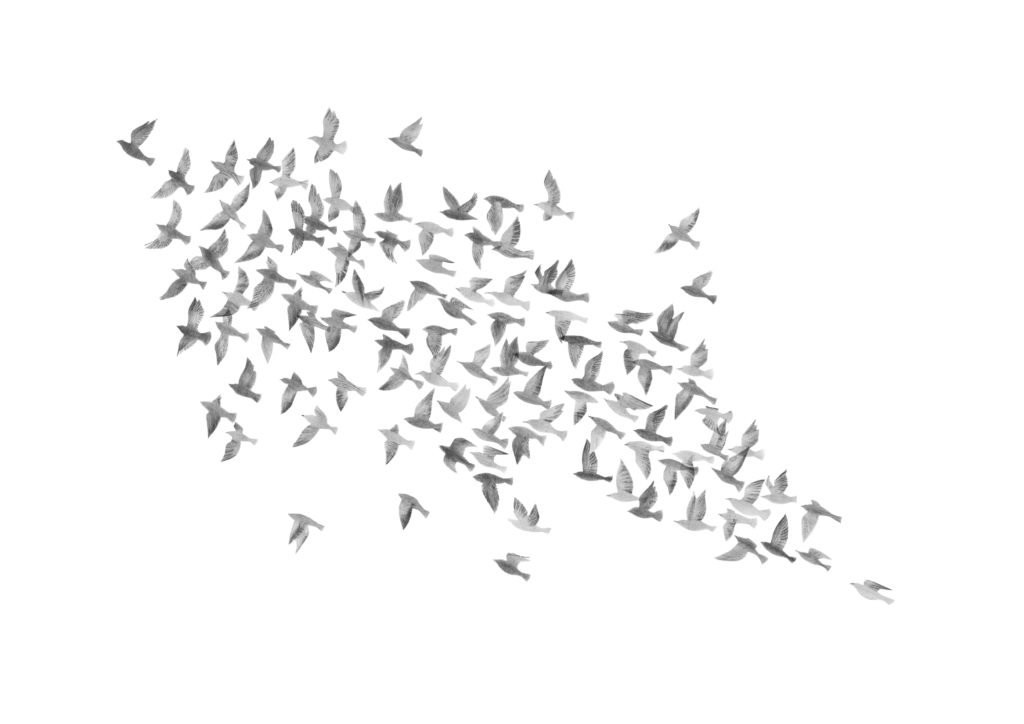 Murmuration (white) - Hannah Bailey