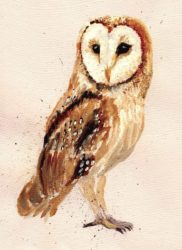 barn owl - Kate Field