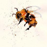 Bee 2 - Kate Field