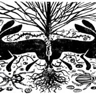 Tree Of Life - Peter O'Donnell