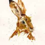 hare 1 - Kate Field