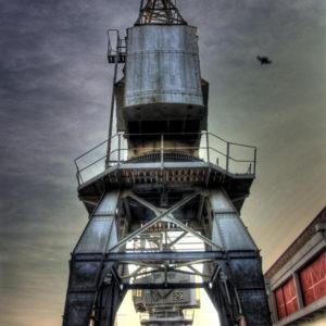 Bristol Cranes - Mark Hayward