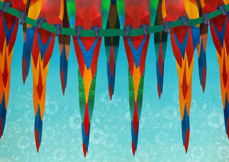 Macaws - Susanna Clasby