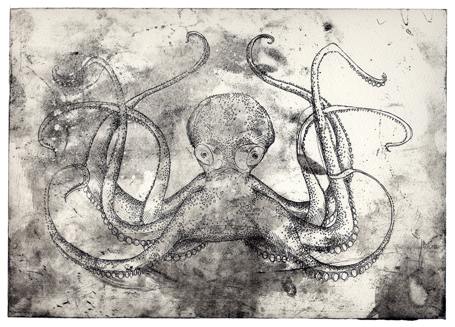 Octopus - Rosie Mclay