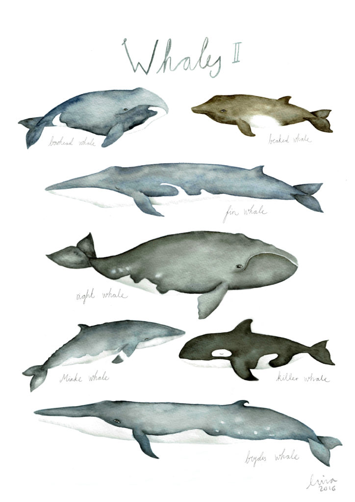 A3 New Whales lina lofstrand