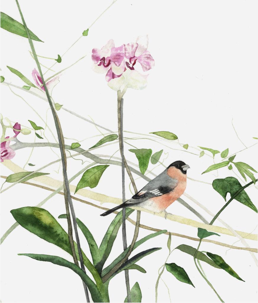 Bullfinch Botanical - Lindsay McDonagh