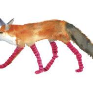 Fox In Socks - Rosie Webb