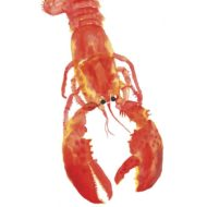 Lobster - Rosie Webb