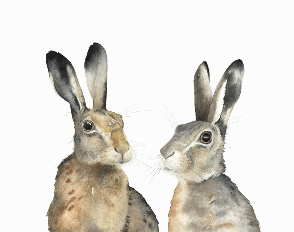 Pair Of Hares - Lindsay McDonagh