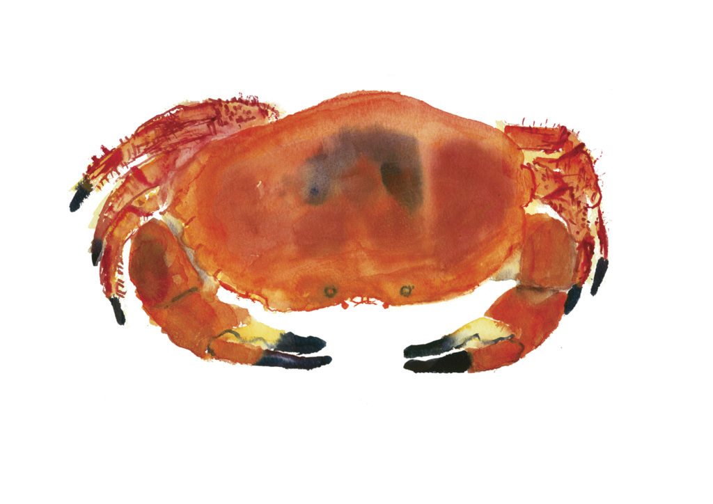 crab rosie webb