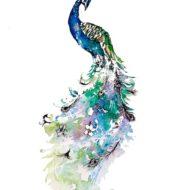 Peacock - Carla James
