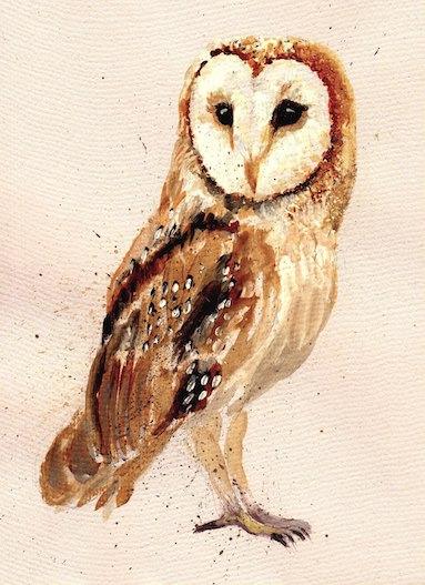 barn owl - Kate Field