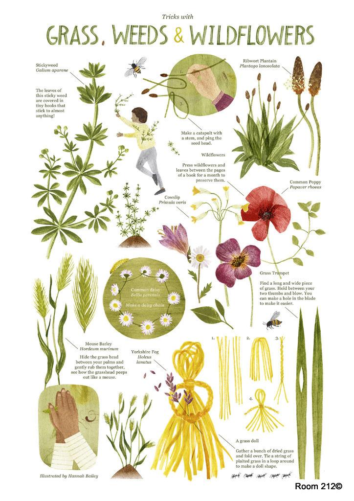 Kansas Wildflowers and Weeds